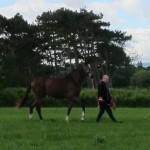 Torpenhow Declan  Leading