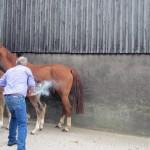 Torpenhow Declan being branded