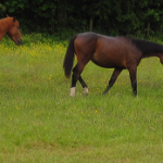 Horses at Torpenhow
